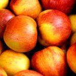 Mela: proprietà, varietà, valori nutrizionali e ricette